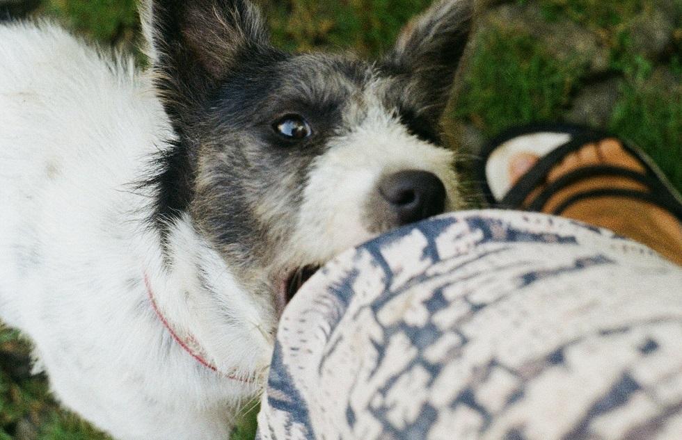 Dog bite laws in Florida